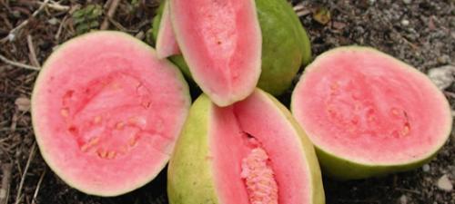 Guava-lg.jpg