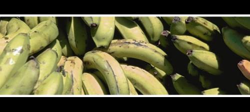 grøn_banan.jpg