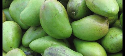 green_mango.jpg